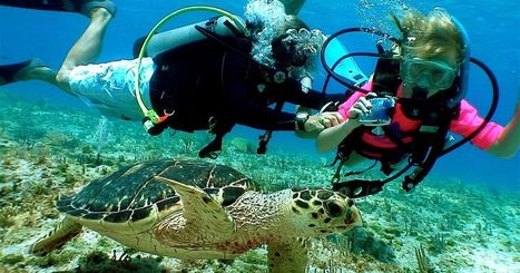 10Best: Scuba sites to try your first dive | DiverSync | Scoop.it