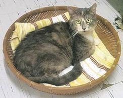 Shelter Tails: Walden shelter to drop adoption fee for June 11 event - Times Herald-Record | Animal Rescue Web Digest | Scoop.it