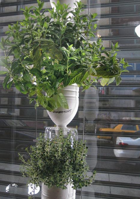 Hidroponia y Cultivos Hidroponicos: Tips para tener una huerta ... | Cultivos Hidropónicos | Scoop.it