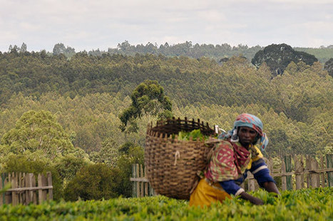 In Tanzania, Conservation Benefits Communities | Conservation Success | Scoop.it