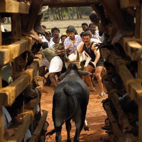 In films, jallikattu showcases masculinity - The Hindu #Tamil   Patriarchy & Masculinity   Scoop.it