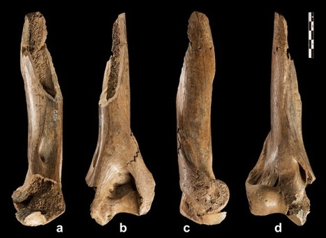 Homo heidelbergensis Wielded Sophisticated Tools, Weapons - Archaeology Magazine | Aux origines | Scoop.it