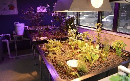 Fillet with a salad: Aquaponics store opens that pairs growing fresh fish with growing vegetables | Aquaponics in Action | Scoop.it