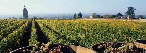 Hail-Damaged Vouvray Producers Get Some Relief | Wine News & Features | Grande Passione | Scoop.it