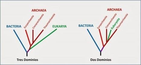 Sobre el origen de las células eucariotas | microBIO | Scoop.it