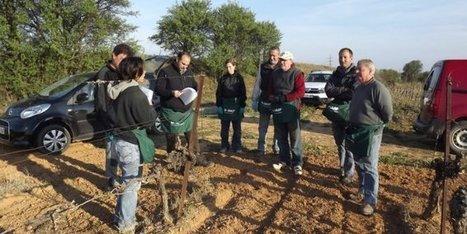 Une démarche de lutte biologique contre la tordeuse de la grappe,  sous l'impulsion du Conseil départemental de l'Hérault | Le Vin et + encore | Scoop.it