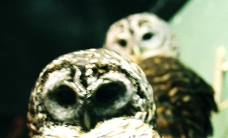 HootSuite launches Conversations, now lets you invite anyone to talk social | Leia + | Scoop.it