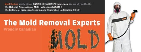 Mold Busters (bustmold) on Twitter | Mold Removal | Scoop.it