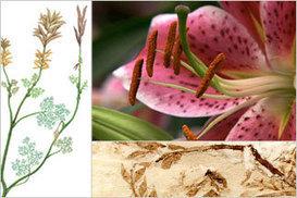 NOVA   Flowers Modern & Ancient   Agave genus   Scoop.it