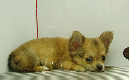 Victory! Jack's Pets Stops Selling Puppies | Care2 | Scoop.it