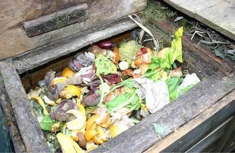 Build a compost cafe | Wild About Gardens | Edible Garden | Scoop.it
