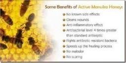 Manuka Honey Benefits - What Are They - Manuka Honey NZ   Manuka Honey Benefits   Scoop.it