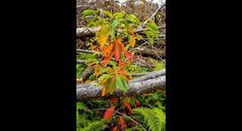 Medio Ambiente: nuevas miradas para la recuperación de bosques devastados   Agua   Scoop.it