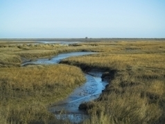 Sustainable Ecosystems and Community News: Decline in Salt Marshes in US Caused by Increased Nutrient Levels | The Wild Planet | Scoop.it