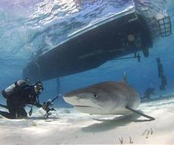 French move boosts shark sanctuaries   Sustain Our Earth   Scoop.it