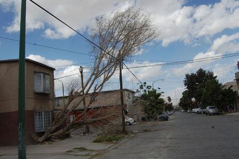 Elaborarán diagnóstico de árboles - El Siglo de Torreón   Ecología Urbana   Scoop.it