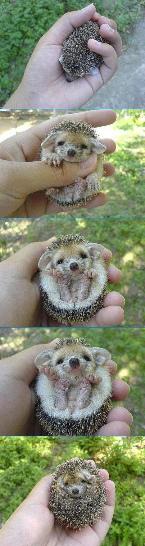 That's what a hedgehog... | Looks -Pictures, Images, Visual Languages | Scoop.it