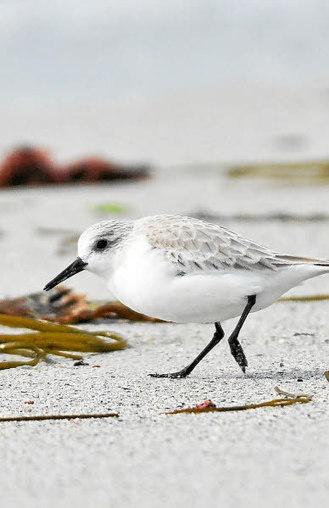 Parc marin d'Iroise.  8.759 oiseaux appartenant à 43 espèces | Voyages et Gastronomie depuis la Bretagne vers d'autres terroirs | Scoop.it