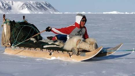 Le petit chasseur de l'Arctique | ARTE | Arctique et Antarctique | Scoop.it