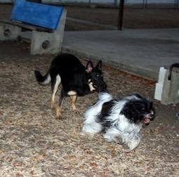 Dogs having fun after obedience classes | Ile de la Barbade | Scoop.it