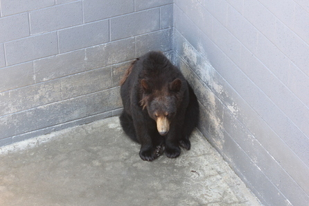 Public Input Sought on New Rules for #Bears in Captivity. | Titan Explores | Scoop.it