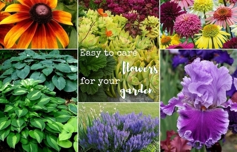 Easy to care flowers you should have in your garden | House cleaning | Scoop.it