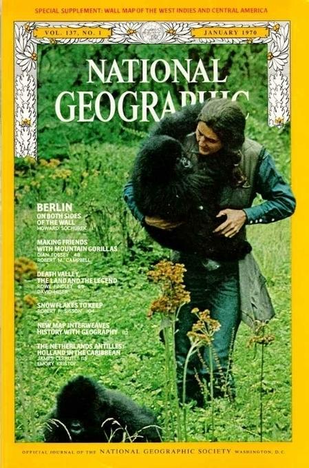 Il y a 30 ans, Dian Fossey était assassinée | Environnement et développement durable | Scoop.it