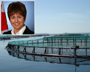 FIS - Worldnews - BC's aquaculture claimed to be boosted through regulations | Aquaculture | Scoop.it