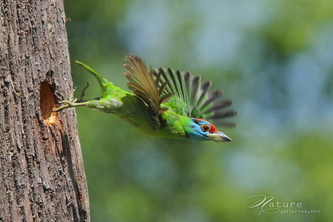 Amazing Bird Photography by Sompob Sasismit | Incredible Snaps | Freefire Nature | Scoop.it