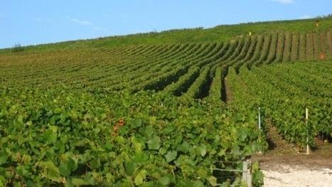 Millésime 2013 - Bordeaux fait les comptes et craint la plus faible récolte depuis 22 ans | Ma Cave En France | Scoop.it