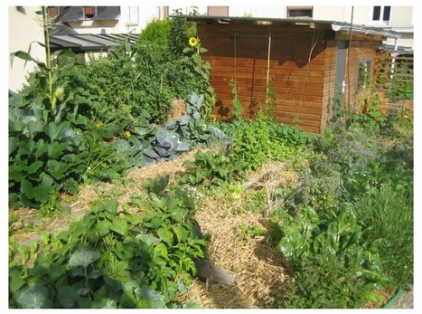 Permaculture urbaine: Joseph récolte 300 kg de légumes bio dans son micro-jardin | ville et jardin | Scoop.it