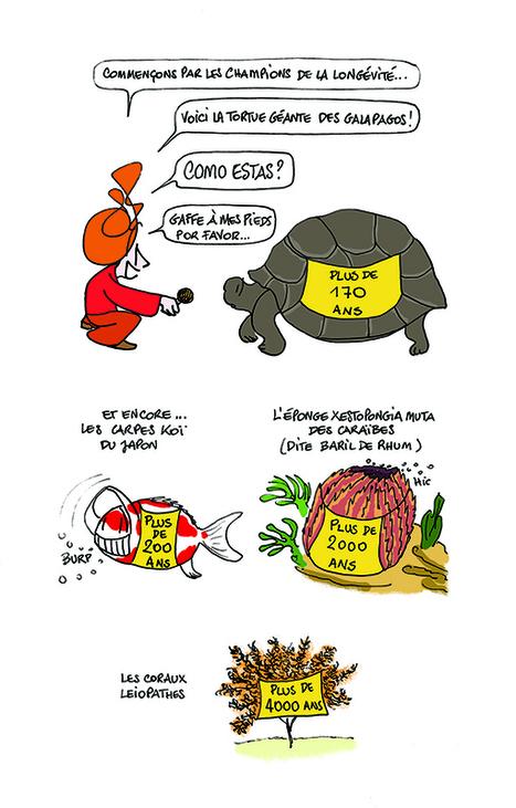 Les animaux immortels | Biodiversité | Scoop.it