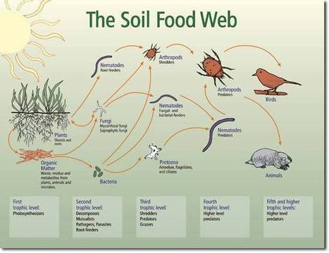 Soil: The Hidden Frontier | Food Security, resilient, sustainable, equitable | Scoop.it