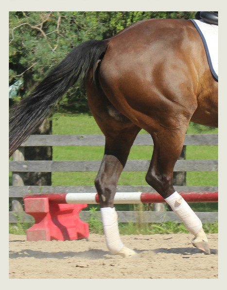 Finding the Magic of the Inside Rein | The wonderful world of horses | Scoop.it