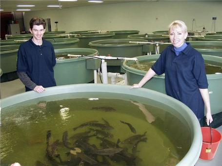 A Career in Aquaculture: A General Overview | Aquaculture | Scoop.it
