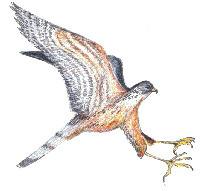 (NL,EN, FR, DE, IT, ES, SV, RU) - Bird names translation index | mumm.ac.be | 1001 Glossaries, dictionaries, resources | Scoop.it