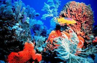 Major changes needed for coral reef survival | Sustain Our Earth | Scoop.it