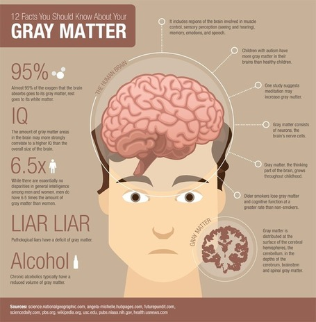 25 Facts You Should Know About Your Gray Matter | Online Universities | Silvana Richardson | Scoop.it