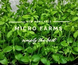 Micro Farming is Source of Fresh Live Foods | Vertical Farm - Food Factory | Scoop.it