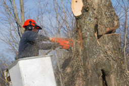 Autumn Tree Service, LLC offers top level removals and trimming in Lexington SC   Autumn Tree Service, LLC   Scoop.it