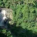 Indonésie, 80 000 hectares de forêts sanctuarisés | Chuchoteuse d'Alternatives | Scoop.it