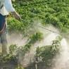 Miller Bee Zzz & Pest Control