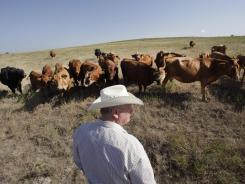 Farmers, ranchers try to cope with climate change - USA TODAY | The Barley Mow | Scoop.it
