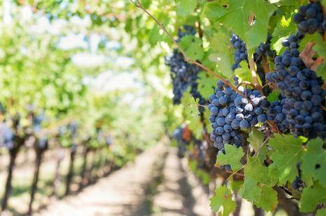 La Vigne numérique veut fédérer les acteurs du numérique et du vin en Pays de la Loire | Vos Clés de la Cave | Scoop.it