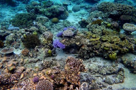 Ocean warming and acidification deliver double blow to coral reefs | Ocean Acidification | Scoop.it
