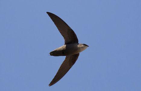 Chauffage: un projet de règlement pourrait menacer certains oiseaux   Ces animaux sauvages ou domestiques maltraités par l'homme   Scoop.it