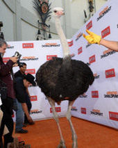 Netflix Paid for an Ostrich to Walk the Red Carpet at the Arrested Development ... - Betabeat | amazing and funny | Scoop.it