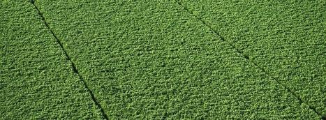 Biorenewable Chemicals | Biorenewable Chemicals & Plastics | Scoop.it