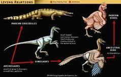evolution of ratites - Google Search | Year 12 Biology - Evolution | Scoop.it