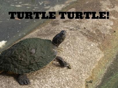 Turtle | Writing | Scoop.it